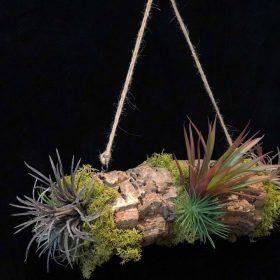 SALES 多肉植物のアレンジメント チランジア